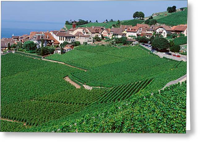 Farm Photography Greeting Cards - Lake Of Geneva, Vineyards, Rivaz Greeting Card by Panoramic Images