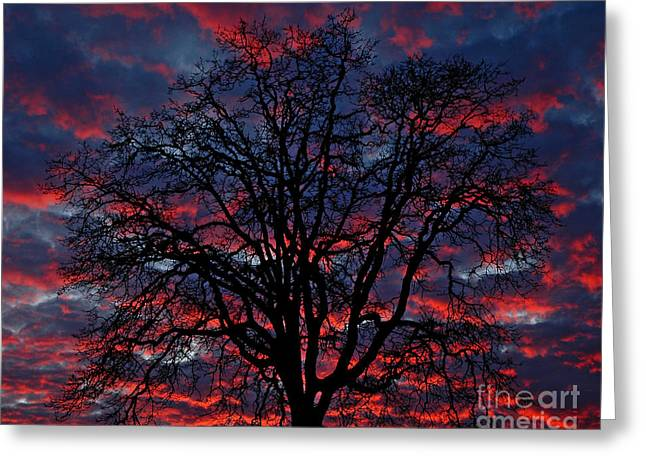 Boren Greeting Cards - Lake Oswego Sunset Greeting Card by Nick  Boren