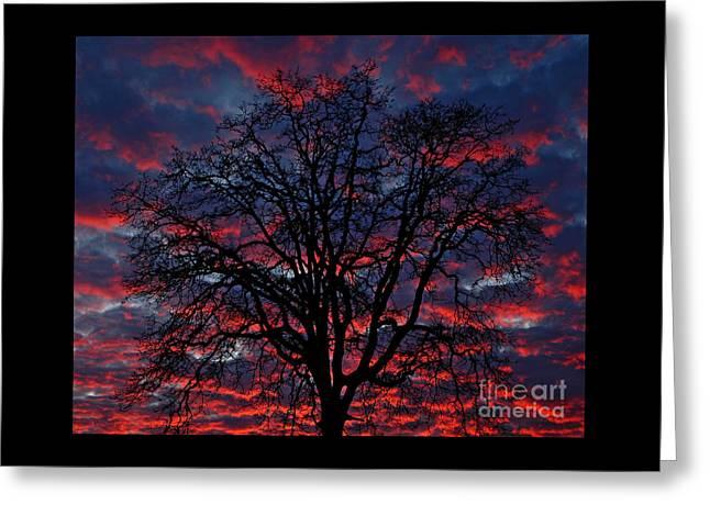 Lake Oswego Sunset Greeting Card by Nick  Boren