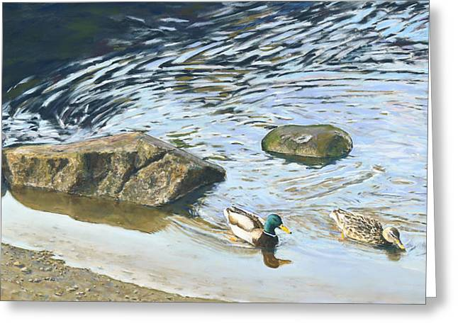 Birdseye Greeting Cards - Lake Padden Series - Mallard and Hen Greeting Card by Nick Payne