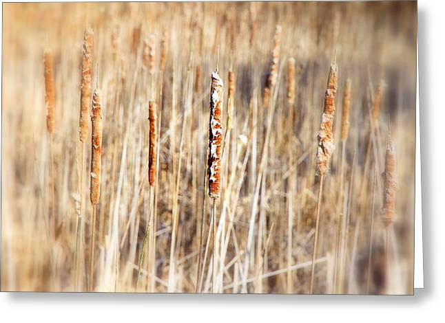 Aquatic Greeting Cards - Lake Reeds Greeting Card by Valentino Visentini