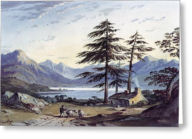 Pines Greeting Cards - Lake Scene Wc Greeting Card by John Varley