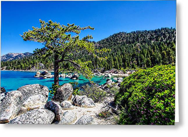 Blue Green Water Greeting Cards - Lake Tahoe Bonsai Tree Greeting Card by Scott McGuire