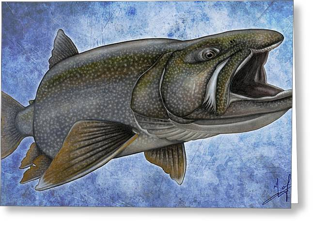 Trout Fishing Drawings Greeting Cards - Lake Trout Greeting Card by Nick Laferriere