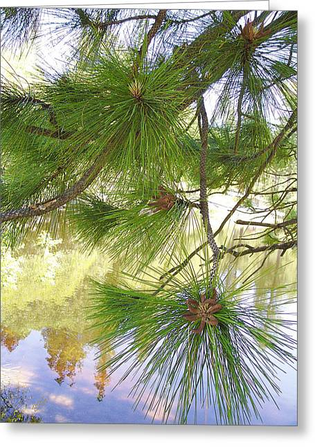 Pine Needles Greeting Cards - Lake View With Ponderosa Pine Greeting Card by Ben and Raisa Gertsberg