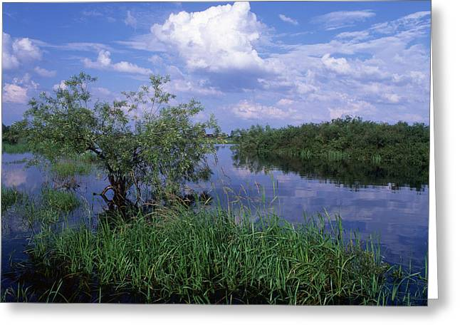 Grass Greeting Cards - Lake Vselug Greeting Card by Anonymous