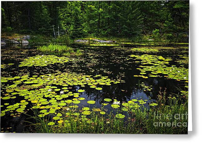 Landscape. Scenic Greeting Cards - Lake with lily pads Greeting Card by Elena Elisseeva