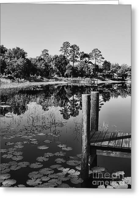 Lilly Pad Greeting Cards - Lakes of Deland Greeting Card by Deborah Benoit