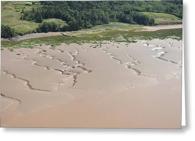 Minas Basin Greeting Cards - Lakeshore Landscape Created By Tides Greeting Card by Bernard Dupuis