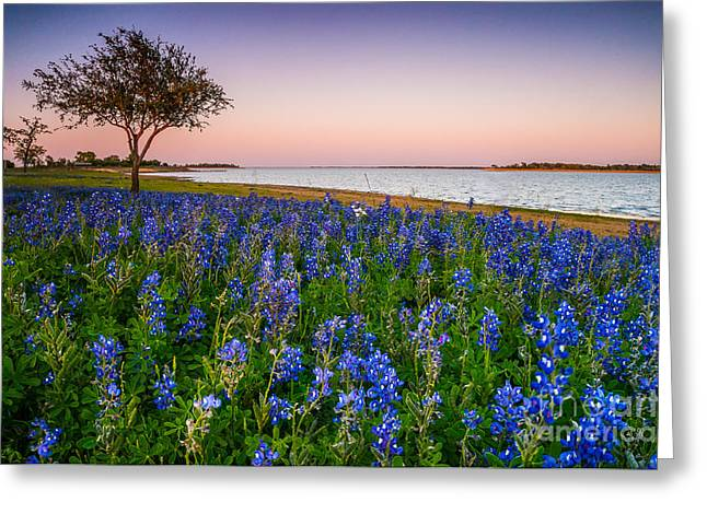 Lakeside Texas Bluebonnets - Wildflower Field In Lake Somerville Greeting Card by Ellie Teramoto