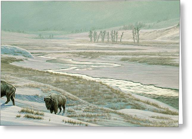 Buffalo Paintings Greeting Cards - Lamar Valley - Bison Greeting Card by Paul Krapf