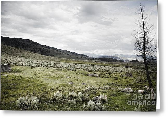 Famous Photographer Greeting Cards - Lamar Valley Vers. 2 Greeting Card by Belinda Greb