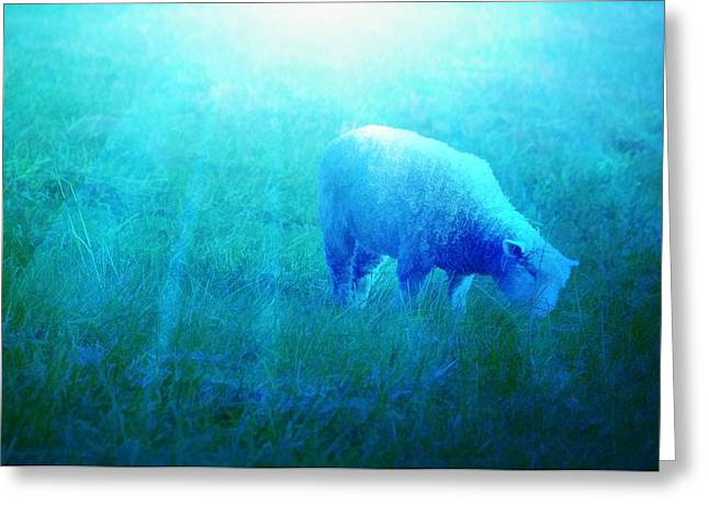 Soft Light Digital Art Greeting Cards - Lamb In Morning Light Greeting Card by Jan Amiss Photography
