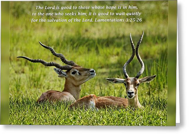 Forgiveness Greeting Cards - Lamentations 3 25-26 Greeting Card by Dawn Currie