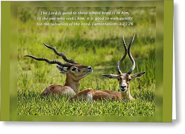 Inspirational Wildlife Prints Greeting Cards - Lamentations 3 25-26 Greeting Card by Dawn Currie