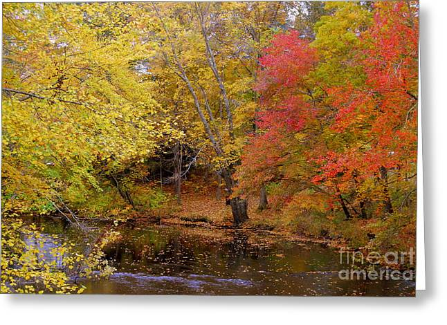 Tree Leaf On Water Greeting Cards - Lamprey In Fall Greeting Card by Eunice Miller