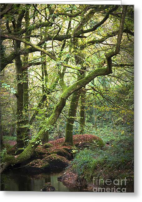 Moss Green Greeting Cards - Land Of Legend Greeting Card by Sophie De Roumanie