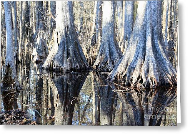 Florida Swamp Reflection Greeting Cards - Land of the Giants  Greeting Card by Carol Groenen