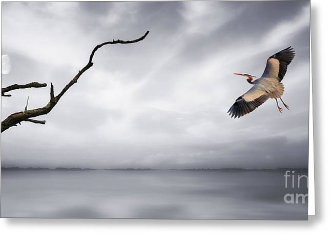 Outdoor Life Art Prints Greeting Cards - Landing Approach Greeting Card by Tom York Images