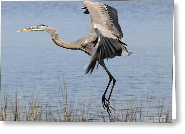 St Joseph Peninsula State Park Greeting Cards - Landing Gear Greeting Card by Adam Jewell