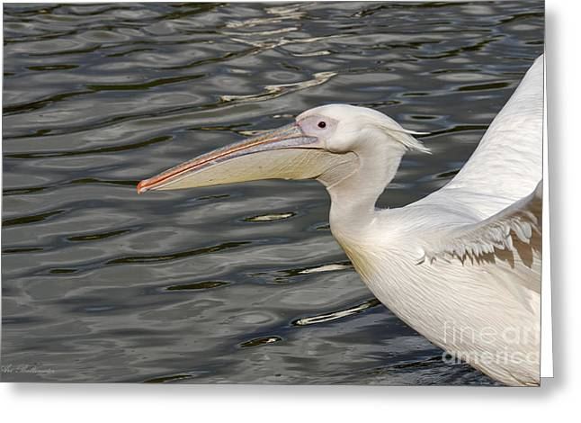 Photo Greeting Cards - Landing on Water  Greeting Card by Arik Baltinester