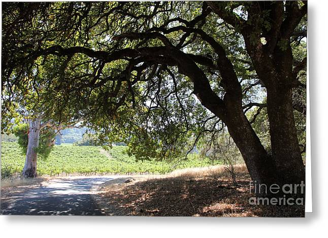 Landscape At The Jack London Ranch In The Sonoma California Wine Country 5d24583 Greeting Card by Wingsdomain Art and Photography