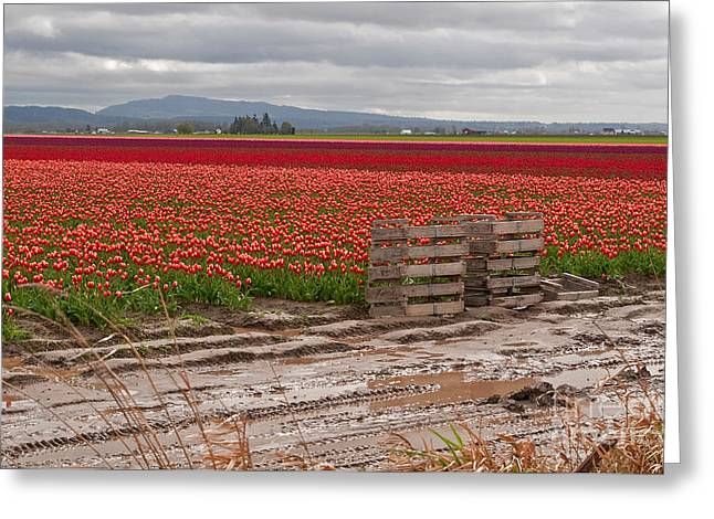 Mud Season Greeting Cards - Landscape of Brilliant Tulip Fields Greeting Card by Valerie Garner