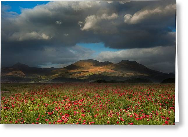 Hay Bales Greeting Cards - Landscape of poppy fields in front of mountain range with dramat Greeting Card by Matthew Gibson