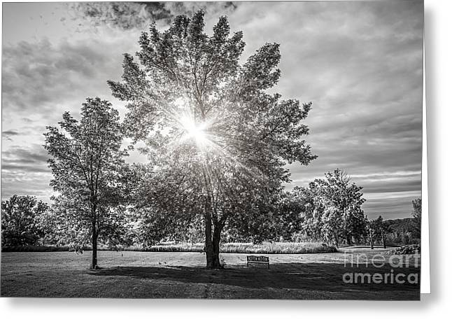 Monochrome Greeting Cards - Landscape with sun shining though trees Greeting Card by Elena Elisseeva