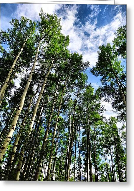 Gravel Road Greeting Cards - Aspen Forest In Colorado Greeting Card by Dan Sproul