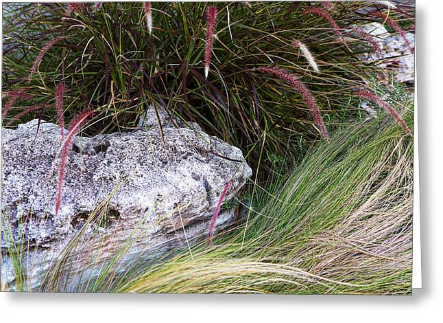 Green Burgandy Greeting Cards - Landscaping Stones and Plants Greeting Card by Linda Phelps