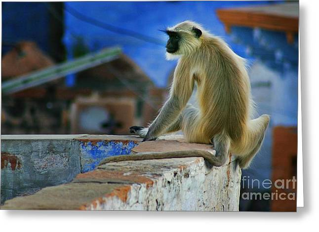 Wife Greeting Cards - Langur on a Wall in Rajasthan Greeting Card by Henry Kowalski