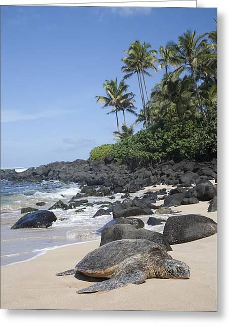 Laniakea Beach Greeting Cards - Laniakea Turtle Greeting Card by Brandon Tabiolo