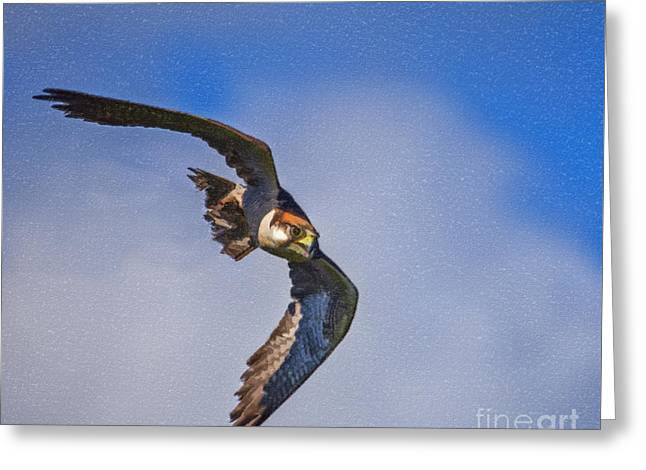 Nature Greeting Cards - Lanner falcon Greeting Card by Liz Leyden