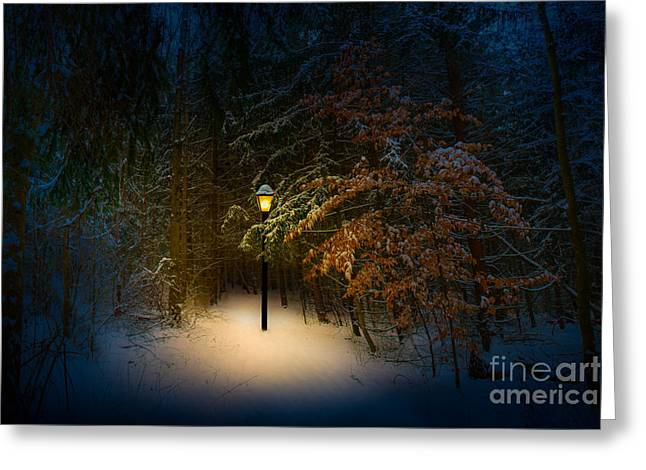 Lantern In The Wood Greeting Card by Michael Arend