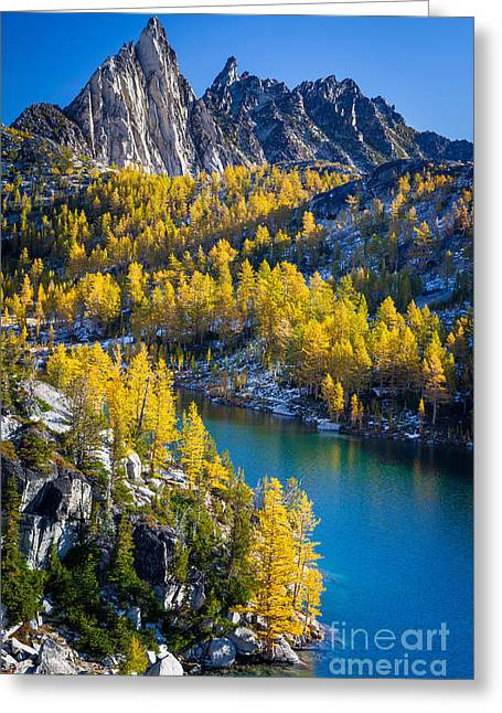 Larches At Perfection Lake Greeting Card by Inge Johnsson