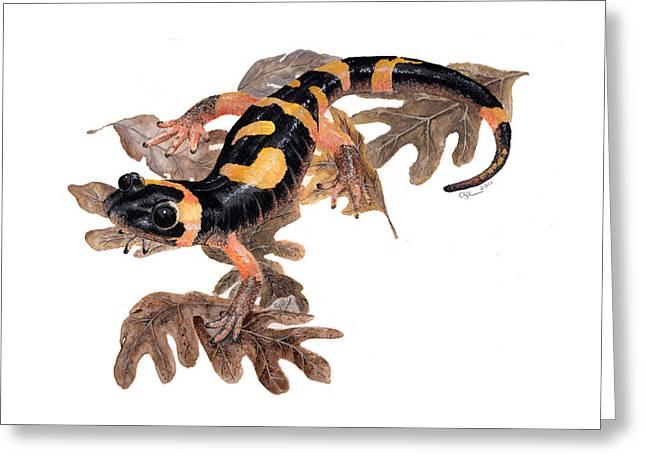 Salamander Greeting Cards - Large blotched salamander on oak leaves Greeting Card by Cindy Hitchcock