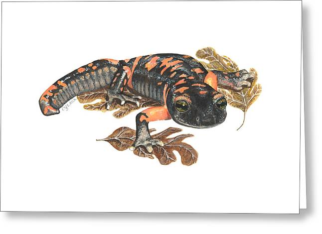 Salamander Greeting Cards - Large Blotched Salamander2 Greeting Card by Cindy Hitchcock