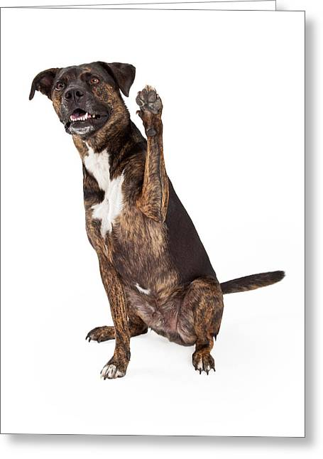 Tricks Greeting Cards - Large Brindle Dog Raising Paw Greeting Card by Susan  Schmitz