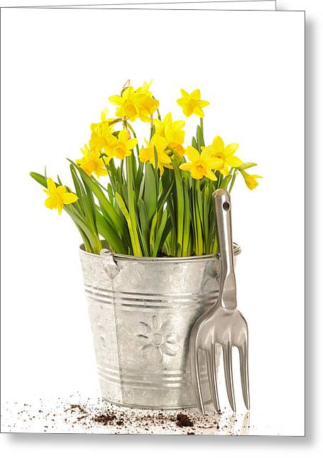 Gardening Tools Greeting Cards - Large Bucket Of Daffodils Greeting Card by Amanda And Christopher Elwell