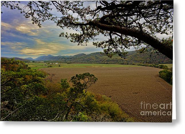 Large Cornfield In Valley Greeting Card by Dan Friend