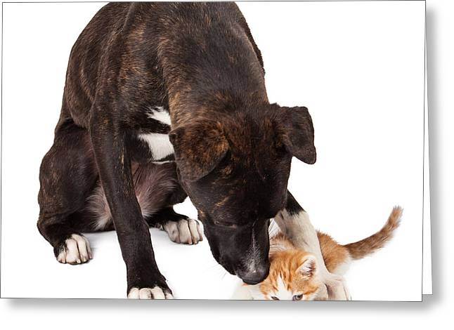Felines Photographs Greeting Cards - Large dog playing with kitten Greeting Card by Susan  Schmitz