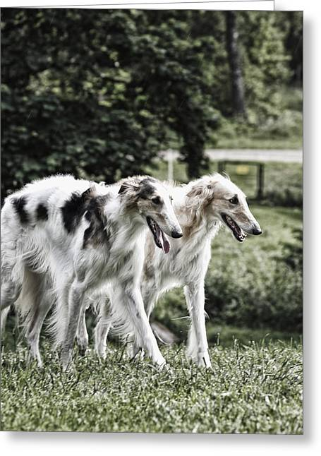 Sight Hound Greeting Cards - Large Dogs On The Prowl Greeting Card by Christian Lagereek