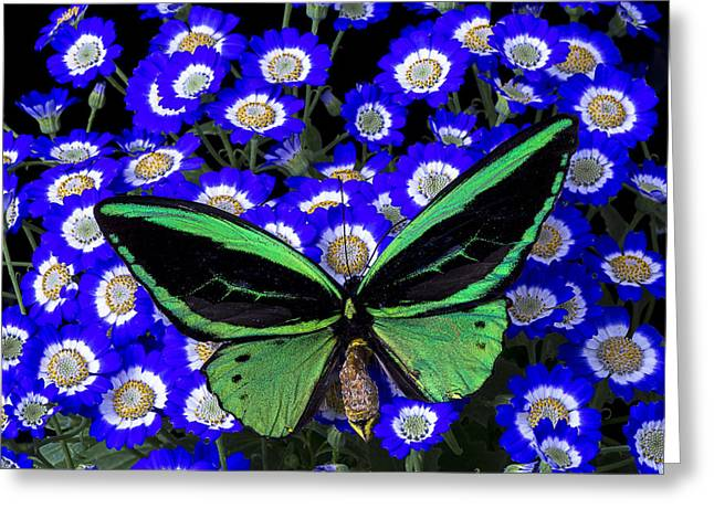 Gorgeous Flowers Greeting Cards - Large Green Butterfly Greeting Card by Garry Gay