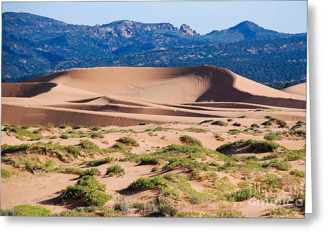 Geobob Greeting Cards - Large Longitudinal Dune in Coral Pink Sand Dunes State park Kane County Utah Greeting Card by Robert Ford