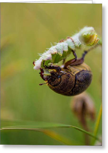 Eating Entomology Greeting Cards - Large Lunch Greeting Card by Rhys Arithson