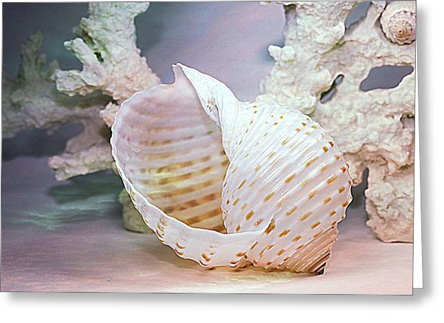 Seashell Picture Photographs Greeting Cards - Large Spotted Tun Greeting Card by Shirley Sirois