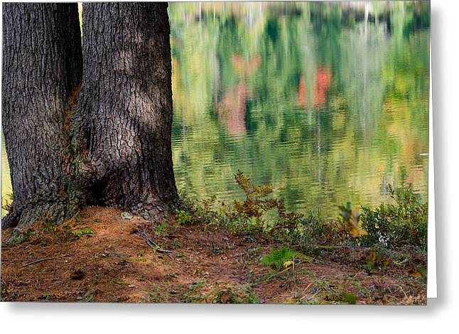 Reflections Greeting Cards - Large tree on the shoreline Greeting Card by Rob Huntley