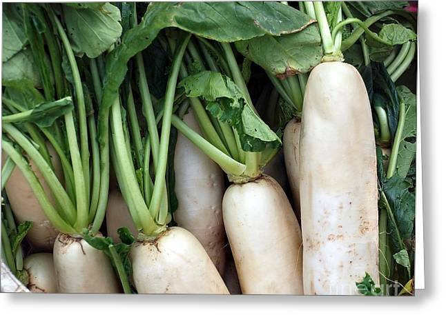 Fresh Radishes Greeting Cards - Large White Radishes or Daikon Greeting Card by Yali Shi