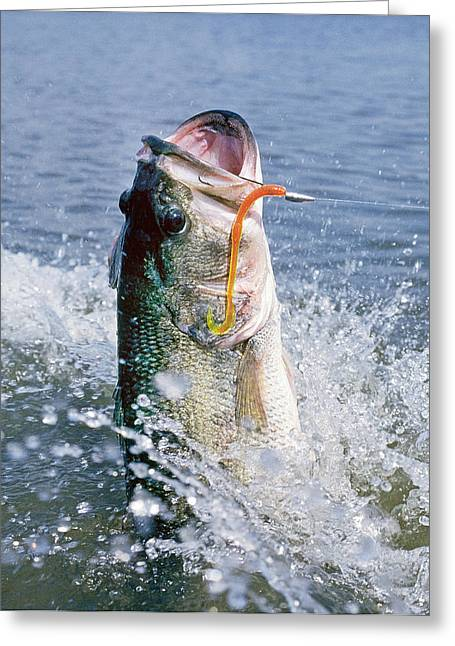 Fishing Tournaments Greeting Cards - Largemouth II Greeting Card by Buddy Mays